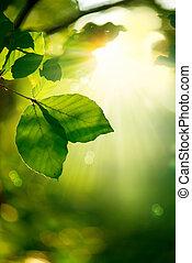 natura, fondo., congedi verdi, e, raggi sole