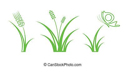 natura, -, icons., 1, parte, erba verde