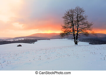 natura inverno, sole, albero, paesaggio neve