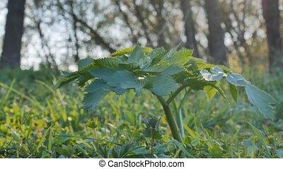 natura krajobraz, słońce, paproć, makro, trawa, las, blask