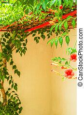 natura, kwiaty, piękny, park, tło