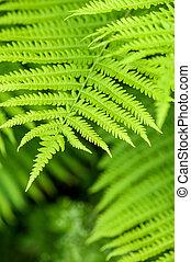 natura, liście, paproć, zielone tło, świeży