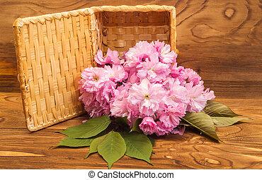 natura morta, fiori, sakura