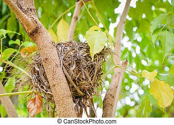 natura, nido, albero, su, uccello, sfondo verde, chiudere