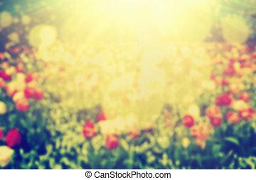 natura, rocznik wina, plama, light., kwiaty, bokeh, tło, słońce