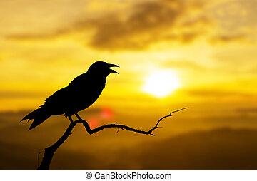 natura, seduta, albero, corvi, tramonto, uccelli