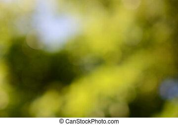 natura, sfondo verde, sfocato