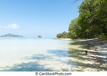natura, -, vacanza, tropicale, fondo, spiaggia