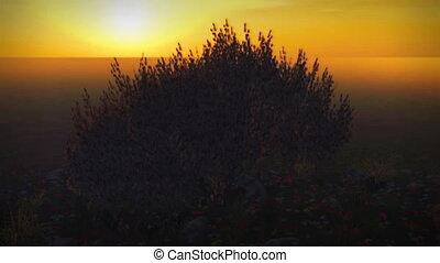 natura, wiosna, (1037), drzewo, zachód słońca, wiśnia