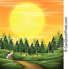 natura, zachód słońca, prospekt