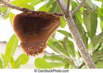 natural, árvore grande, abelha, verde, favo mel