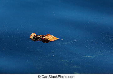 Natural abstract background. Yellow dry leaf lying on the blue surface of the water close-up