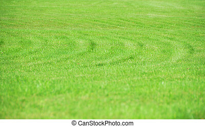 Natural Abstract Grass Background