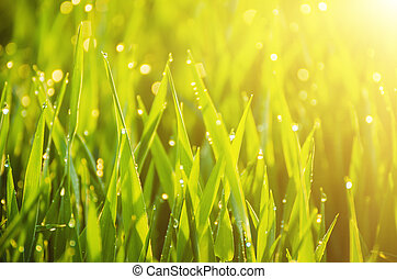 Natural abstract sunny background