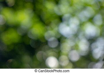 natural, aire libre, bokeh, plano de fondo, hojas verdes, en, garden., hermoso, verano, disposición