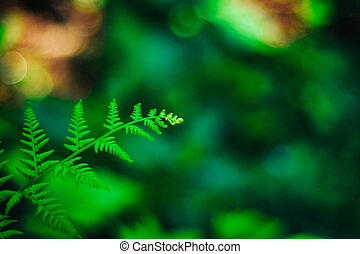 Natural backdrop with green fern leaves on blurred bokeh background. Selective soft focus. Close up of a shield fern in forest.