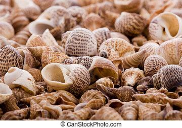 Natural background - ocean shells