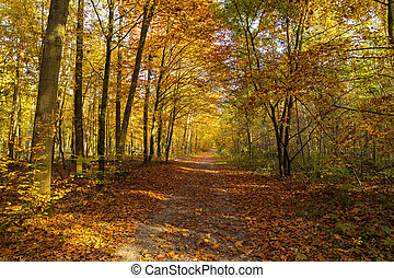 Natural background of autumn forest on a sunny day