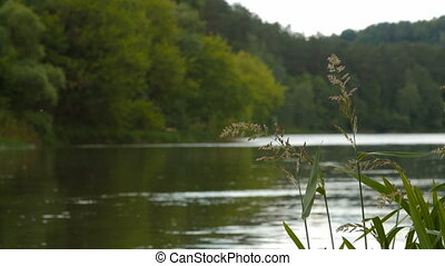 Natural background of bent grass against water. - Natural...