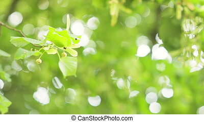 Natural background of defocused, sunlit forest background....