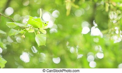Natural background of defocused, sunlit forest background....