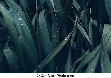 natural background of green grass after rain