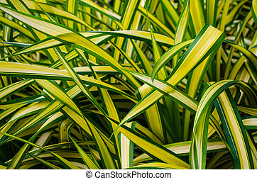 Natural background of green leafy plants