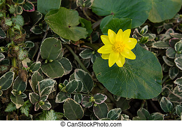 natural background of green leaves and yellow flower