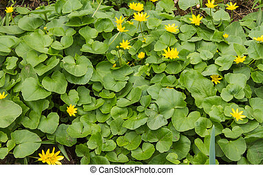 natural background of green leaves and yellow flowers