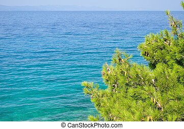 Natural background sea and tree