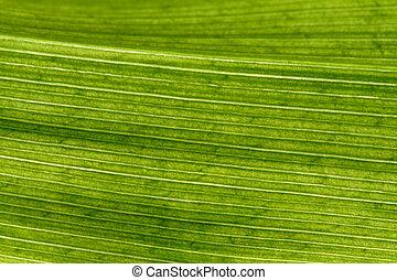 Natural background - leaf in closeup