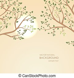 Sunset on a background of tree branches