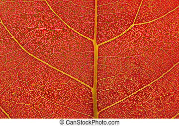 Natural background texture of autumn red leaf closeup