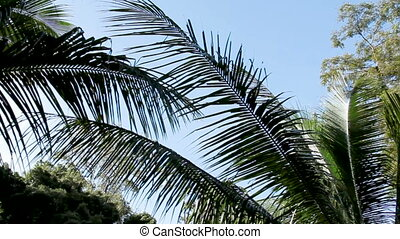 Natural background with evergreen tropical plants and palm...
