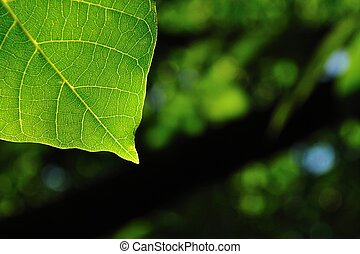 Natural background with green leaf