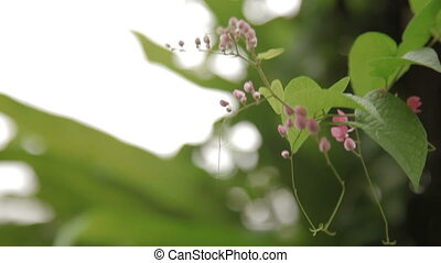 Natural background with pale pink flowers. - Natural...