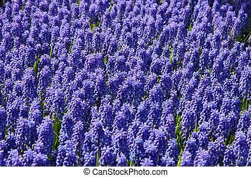 natural, backgrounds:, bluebells