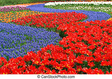 natural, backgrounds:, tulipanes