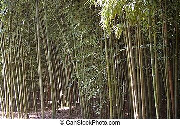 Natural Bamboo Plantation
