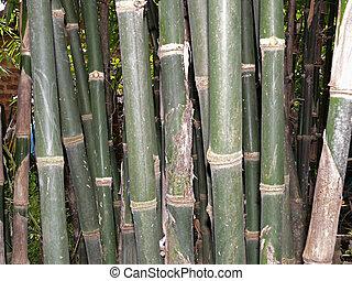 Natural bamboo sticks.