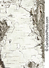 Natural bark of birch useful for background