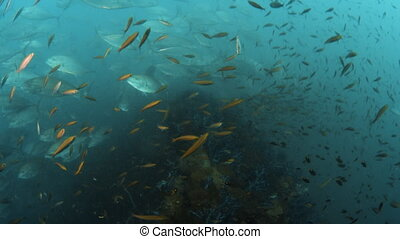 Natural barriers under the sea - A moving shot exploring a...