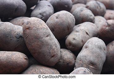 natural, batatas, cima, pilha, estúdio, fresco, fim, tiro