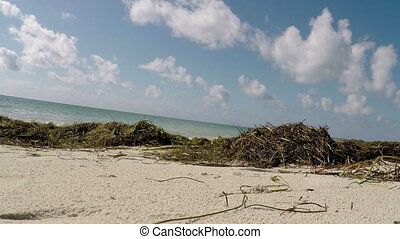Natural Beach Florida Keys tilt view seaweed ocean and blue...