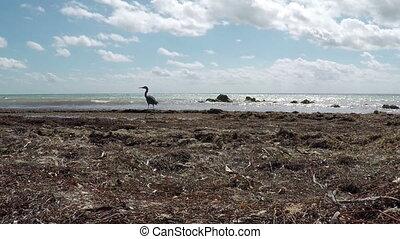 Natural Beach Time Lapse Bird