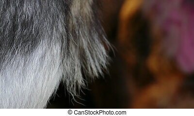 Natural black fox fur background - Close up of Natural black...