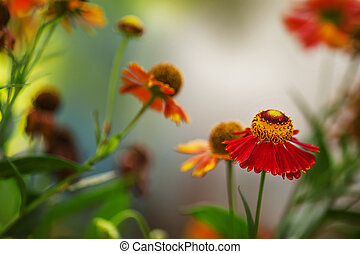 Natural blur green background with orange-red flowers, blurred image, shallow depth of field