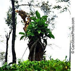 Natural Bonsai tree on died tree