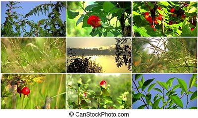 Natural collage