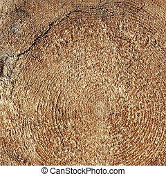 Natural Color Old Wood Grain Log Square Frame Texture Close-Up